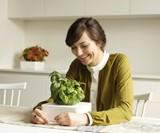 Click & Grow SmartPot Plants - Basil