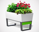 Glowpear Urban Garden Self-Watering Planters