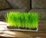 Grow 'n' Serve Microgreen Kits