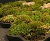 Moss Carpet - Living Bath Mat