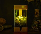 OrchidBox Smart Mini Terrarium