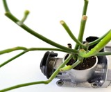 Recycled Motorcycle Carburetor Planter
