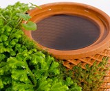 terraplanter Inside-Out Hydroponic Planter