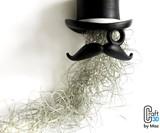 Top Hat & Face Planter