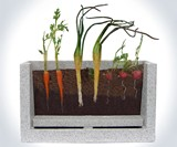 Transparent Root Vegetable Farm