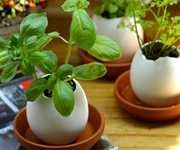 Eggling Crack & Grow Plants