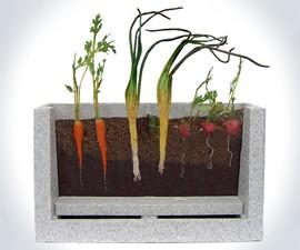 Transparent Root Vegetable Farm