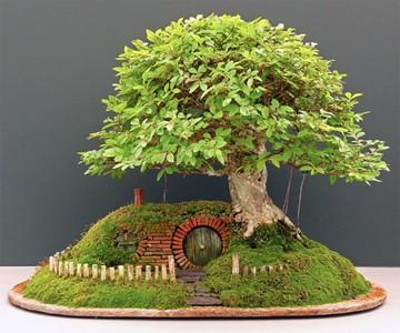 Bilbo Baggins Bonsai Home