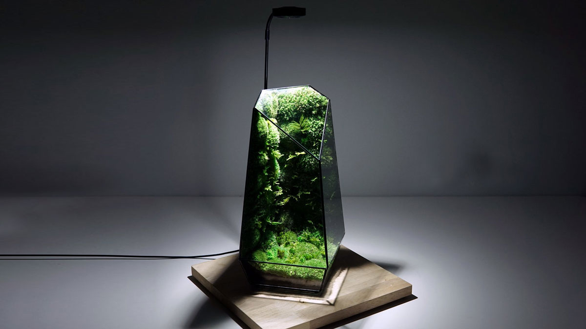 TerraLiving Preserved Moss Terrariums
