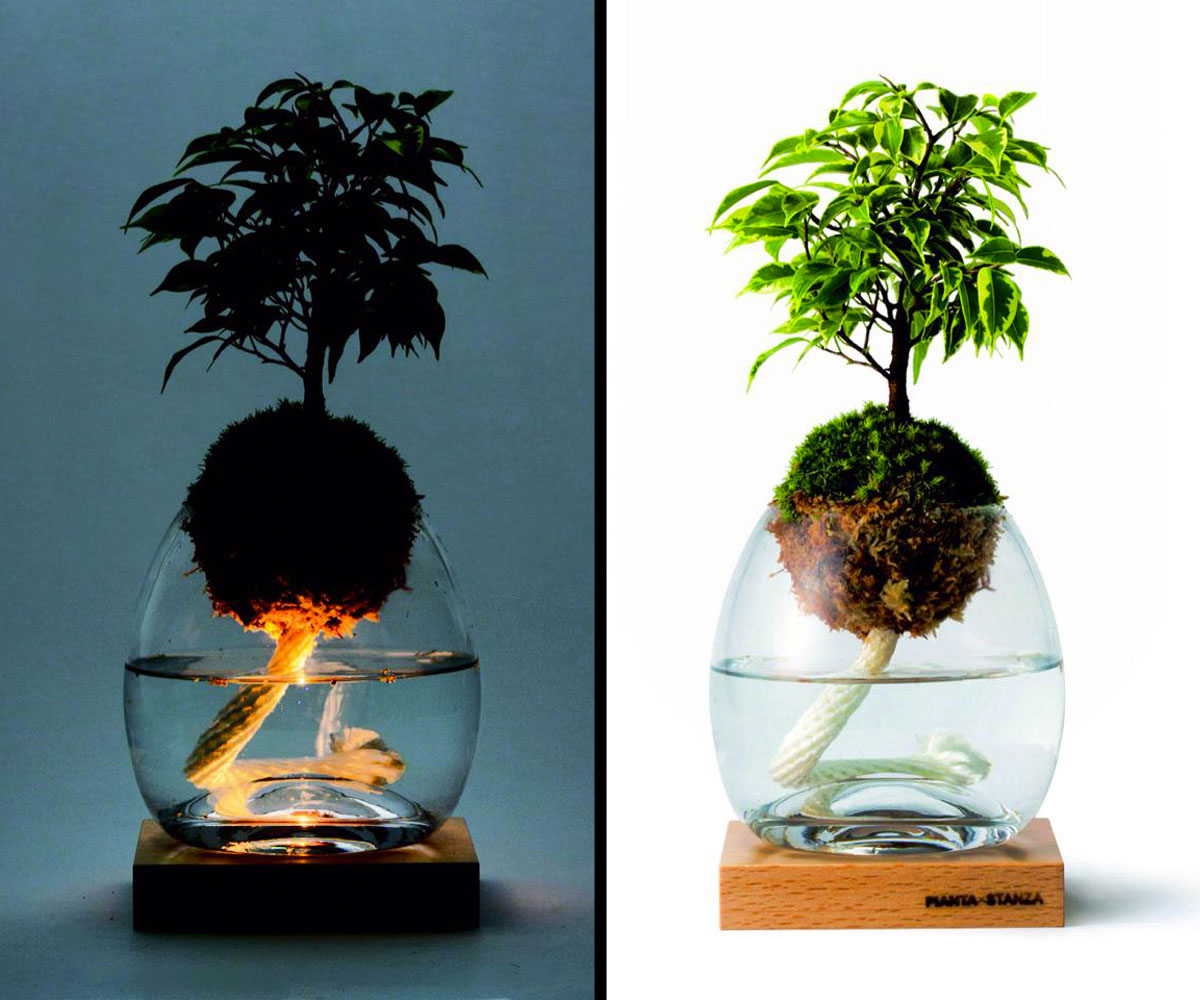 How To String Lights On A Ficus Tree : Torch Plant Light Botanical Candle DudeIWantThat.com