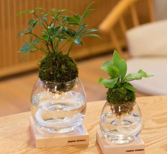 Torch Plant Light Botanical Candle Dudeiwantthat Com