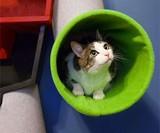 Voltron Cat Condo
