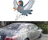 Prank Fake Bird Poop