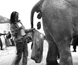 Woman Collecting Elephant Shit