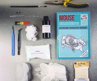 Mouse Taxidermy Kit