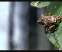 Epic Frog Escape