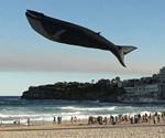 Life-Size Blue Whale Kite