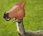 Horse Head Squirrel Feeder