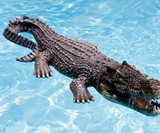 Floating Crocodile Pool & Pond Decoy