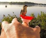 Hummingbird Ring Feeder