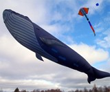 Life-Size Blue Whale Kite - Closeup View