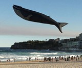 Life-Size Blue Whale Kite