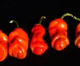 Peter Pepper Seeds