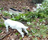 Rent-A-Goat - Invasive Plant Eaters