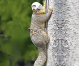 Squirrel Tree Climber Garden Statue
