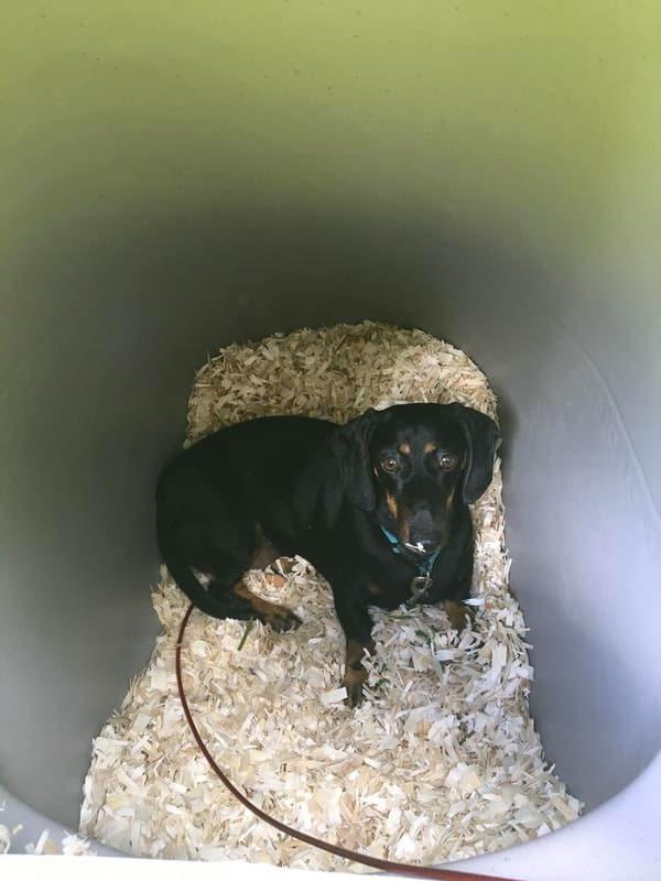 DogEden - Underground Dog House   DudeIWantThat.com