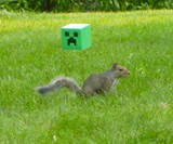 Minecraft Squirrel Feeder