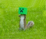 Minecraft Creeper Squirrel Feeder