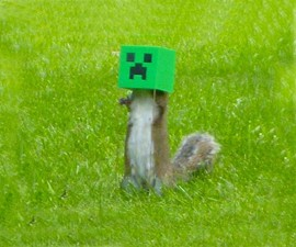 Minecraft Creeper Squirrel Feeder