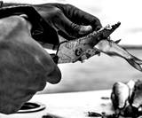 Gerber Processor Take-A-Part Fishing Shears
