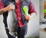 Kombo Fish Tool