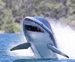 Seabreacher Shark X, Head-On View