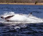 Seabreacher Shark X Submarine, Side View