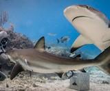 Neptunic Steel Mesh Sharksuit