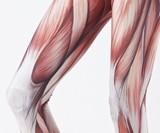 Anatomical Leggings