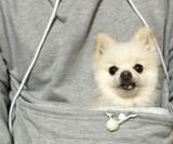 Mewgaroo Pet Pocket Hoodie