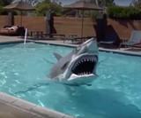 Animatronic Shark Costume
