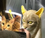 Become Your Cat Mask