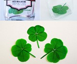 Insta-Luck - Authentic Four-Leaf Clover