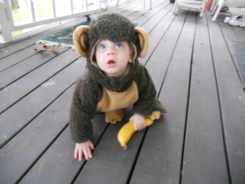 Infant Monkey Costume - DudeIWantThat.com